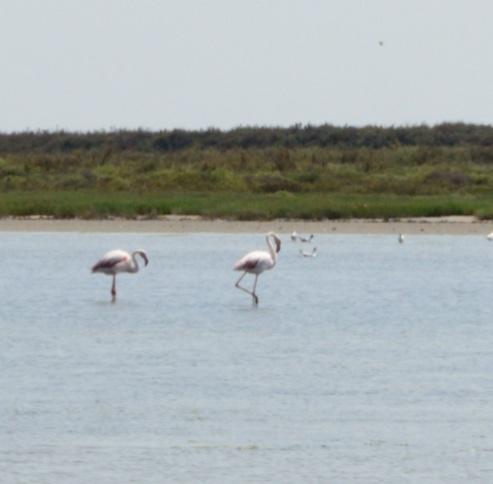 Zwei Flamingos im Wasser